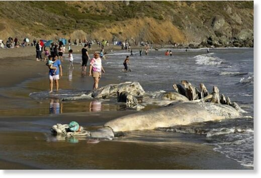 Muir Beach saw many visitors and a gray whale carcass on April 17, 2021.