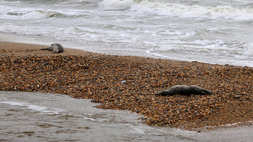 About 170 endangered seals found dead on Russia's Caspian coast