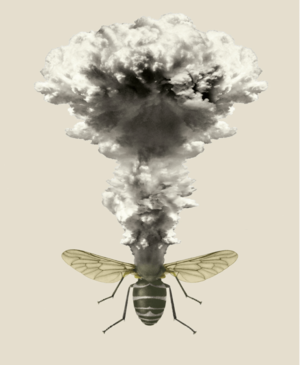 insect explosion