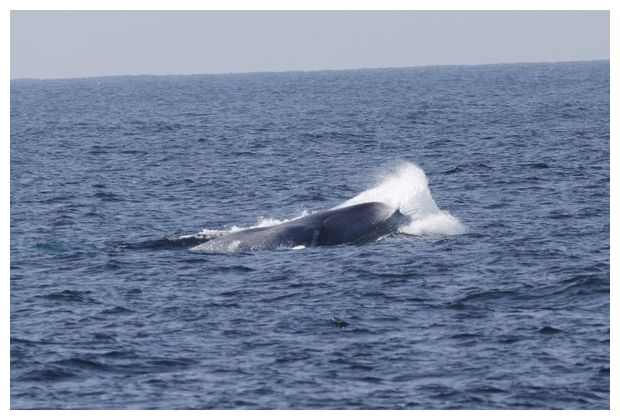 full essays about the whale sound Whales make noise to communicate, locate food, and find each other.