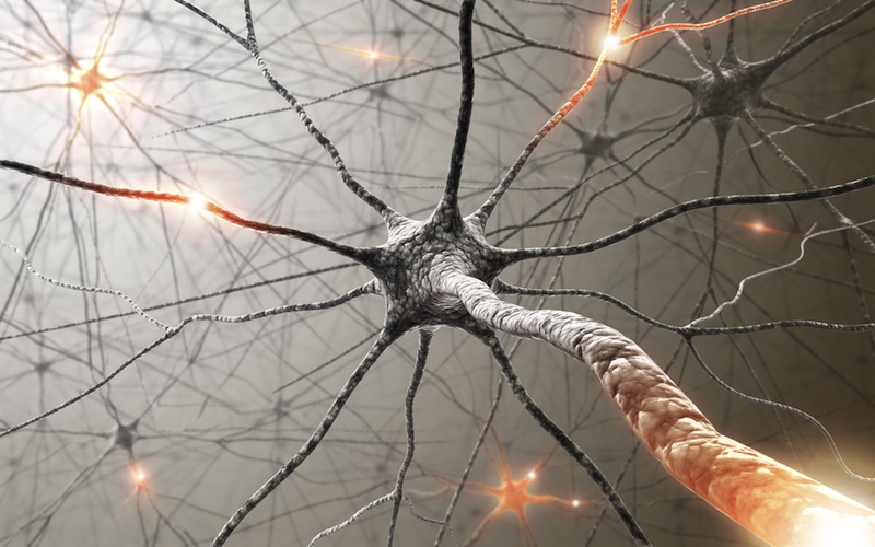 Human Brain Loses Billions of Neurons in New Analysis