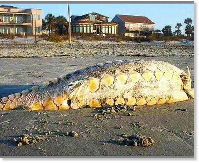 Marine Monster mystery on South Carolina Beach -- Earth ...
