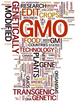 a report on genetically engineered foods Since the first commercialization of ge foods, the us national academy of  sciences (nas) has produced three major reports addressing the.
