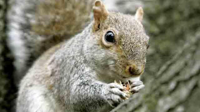 Palomar Mountain Squirrels Test Positive for Plague