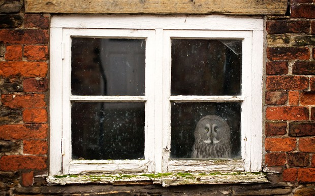 Gandalf, the agoraphobic owl, is given his own brick house