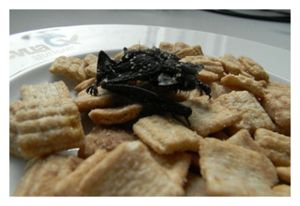 Bat in Cereal