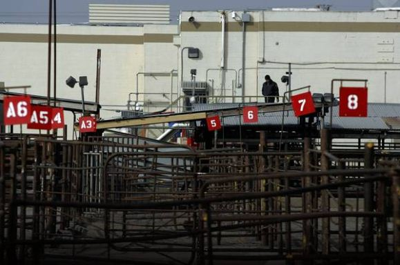 California slaughterhouse to pay $300,000 in settlement