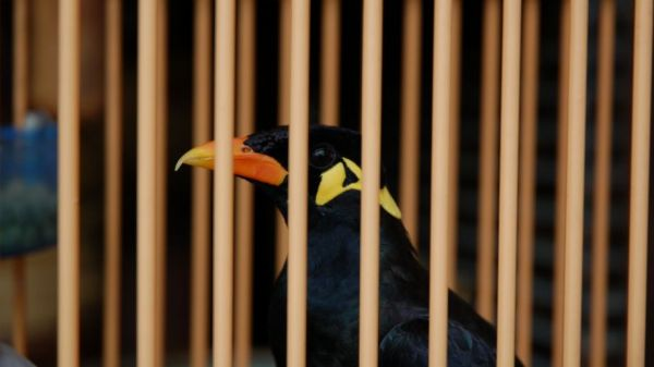 Bird removed from Chinese zoo for screaming obscenities
