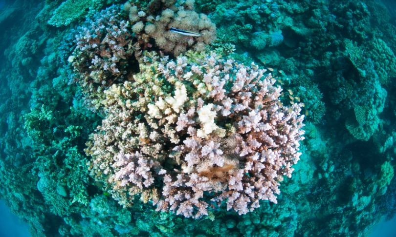 China's corals doomed