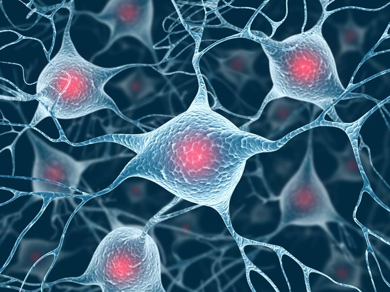Newfound brain cells linked to high blood pressure
