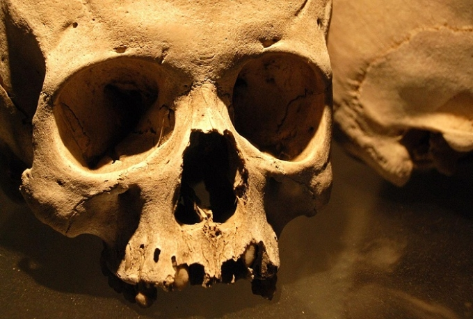 Animal provides genetic clue to recent human evolution