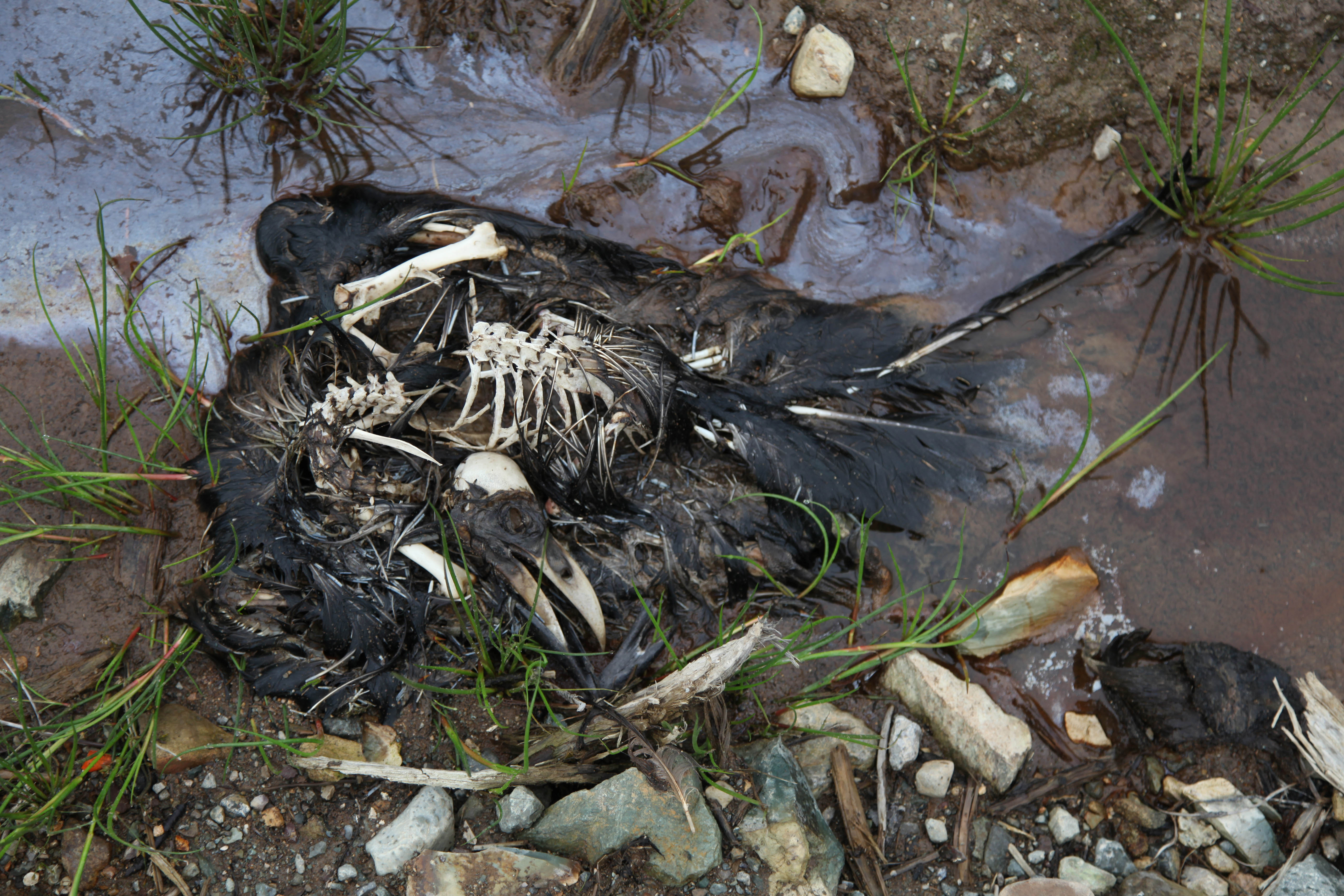Dead birds found around cellular tower in Conception Bay South, Canada