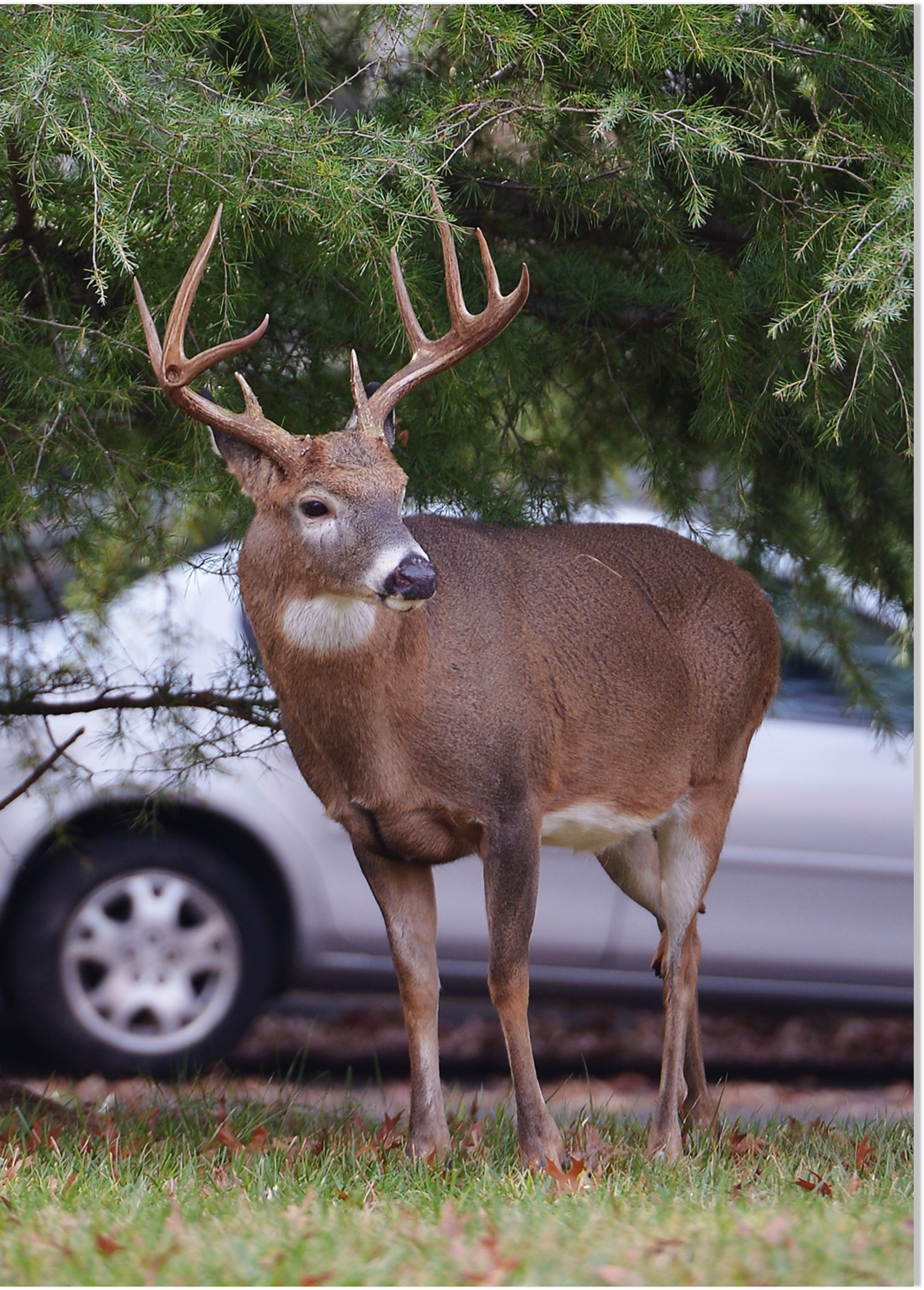 Pet Deer Partially Blinds Owner During Attack Earth