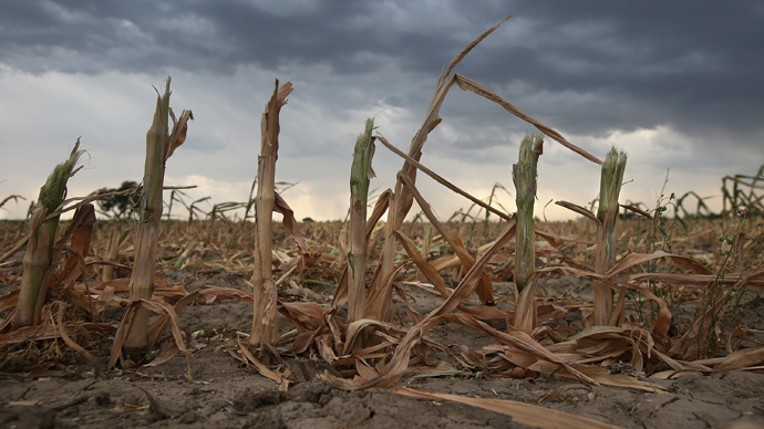 Unintended consequences: US ethanol revolution causes 'ecological disaster'