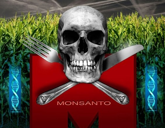 10 studies showing that GMOs can be harmful to human health