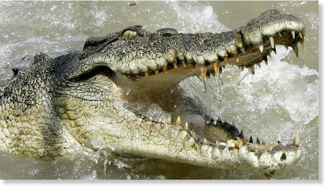 8a8bb108ee3075 52-year-old man snatched from boat by crocodile in Australia ...